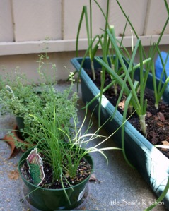 Green onions, thyme and oregano
